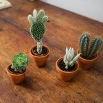 kit gli cactus