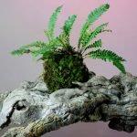 Un mondo green sospeso: il kokedama. | Prima Edizione 14/01