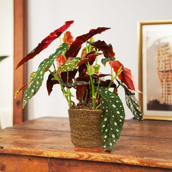 eleganza in una pianta