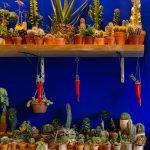 Cornetto napoletano con cactus
