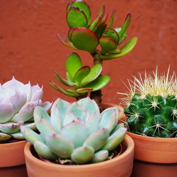 """Kit cactus """"I cactus per tutti"""""""