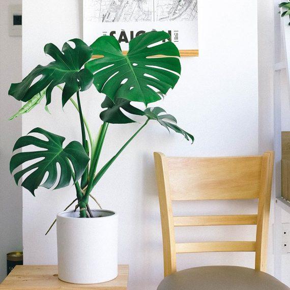 La pianta che non può mancare nella tua collezione