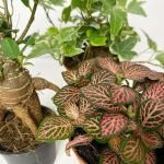 Le piante per realizzare il tuo terrario