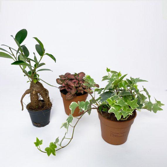 piante terrario