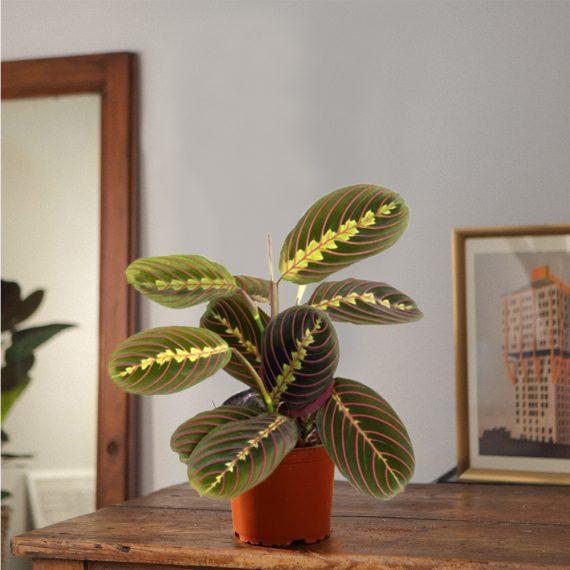 la pianta con le foglie disegnate