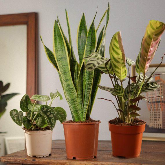 """Tre piante """"facili"""" a prova di pollice nero!"""