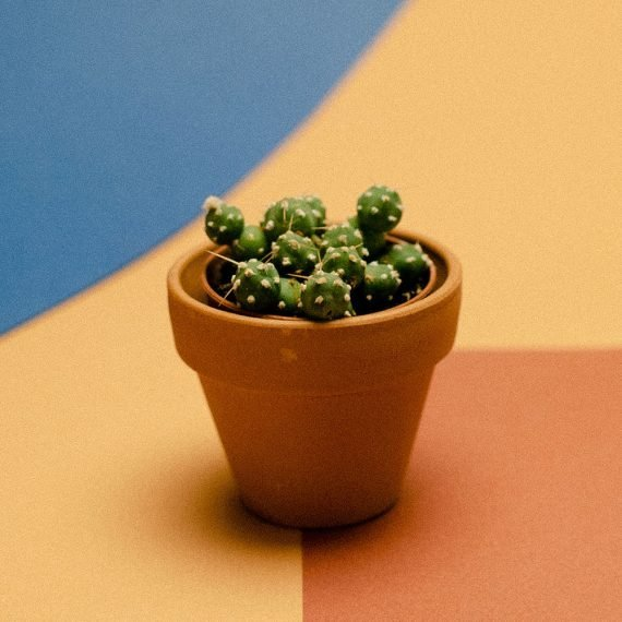 Il piccolo cactus fatto di sfere.