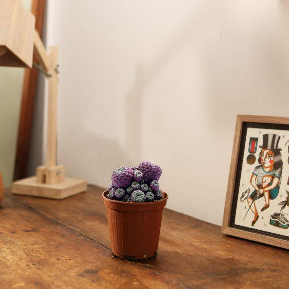 Il Cactus Viola.