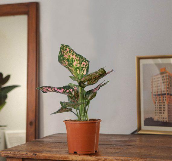 Una pianta bella e resistente.