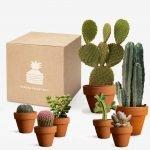 Una box piena di cactus ogni 2 mesi.