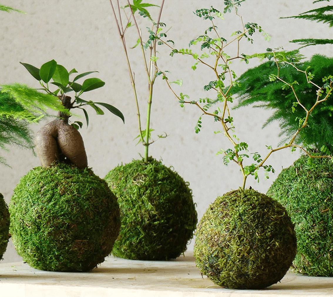 arte giapponene dei kokedama
